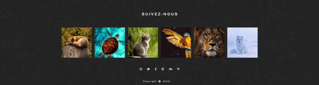 Footer Animal Galerie